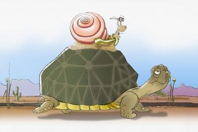 tortoise/snail